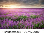 meadow of lavender. nature... | Shutterstock . vector #397478089