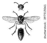 wasp hornet view below and... | Shutterstock . vector #397515061