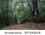 autumn forest. forest trail in... | Shutterstock . vector #397543639