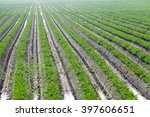 agricultural field on which... | Shutterstock . vector #397606651