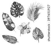 vector hand drawn tropical... | Shutterstock .eps vector #397651927