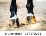 Horse Foots And Shoe