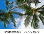 under the palm trees of oahu ... | Shutterstock . vector #397725079