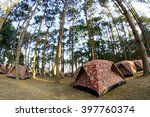 Camping In Pine Forrest At Phu...