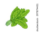 hand drawn spinach isolated on... | Shutterstock .eps vector #397874431
