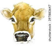 Cow Watercolor Illustration....