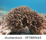Small photo of bush coral,sea blackground,blue sea,coral,aea animals