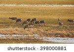 Herd Of Deer In A Large Farm...