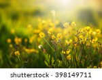field of spring flowers and... | Shutterstock . vector #398149711