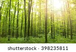 sunlight in the green forest ... | Shutterstock . vector #398235811