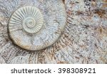 Ammonites background picture