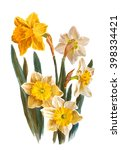daffodils flowers  isolated on... | Shutterstock . vector #398334421