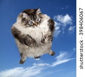Stock photo cat flying in blue sky 398406067