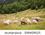 Herd of sheep of the Pyrenees, France