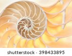 Nautilus Shell Section  Perfec...