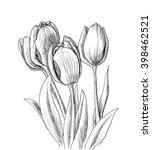 Hand Drawn Decorative Tulips...