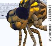 Meganeura Dragonfly Head 3d...