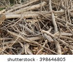 pile of tree branches... | Shutterstock . vector #398646805