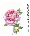 rose watercolor.  illustration... | Shutterstock . vector #398648065