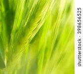 green wheat ear. | Shutterstock . vector #398656525