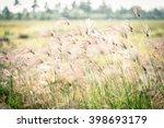 Grass Flower Closeup Of Garden...
