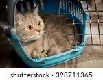 Stock photo cat sits inside pet carrier 398711365