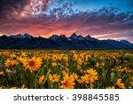 field of wildflowers in wyoming'...   Shutterstock . vector #398845585