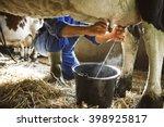 Stock photo milking cow 398925817