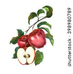 Group Of Apples With Leaves On...