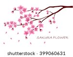 Sakura Flowers Vector...