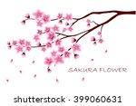 Sakura Flowers Vector...