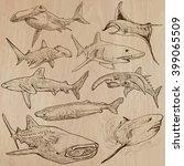 animals   sharks  chordata....   Shutterstock .eps vector #399065509