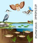 birds and fish by the pond... | Shutterstock .eps vector #399091519