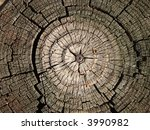 Cross Section Of The Old Tree...