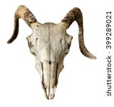 isolated skull of a sheep or... | Shutterstock . vector #399289021