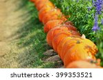 Pumpkin Stems In Large Garden.