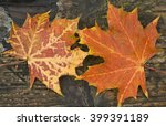 Small photo of Maple leaves (Acer) landscape format, Autumnal maple leaves set against the grain of an old wooden plank