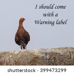 Small photo of A concept picture of a Red Grouse claiming that he is so perfect or dangerous people should be warned about him