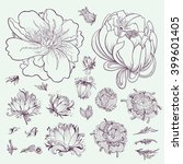 vector outline flowers sketch... | Shutterstock .eps vector #399601405