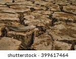 Dead Fish On Dry Ground
