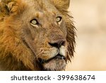 stare of the king | Shutterstock . vector #399638674