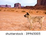 Stray Dog In Monument Valley...