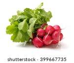 fresh radish on white background | Shutterstock . vector #399667735