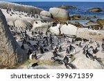 penguins at the boulder beach... | Shutterstock . vector #399671359