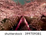 Cherry Blossoms At Night In...