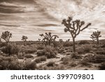 Joshua Tree Landscape In Sepia 3