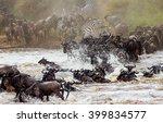 Wildebeests Are Crossing Mara...