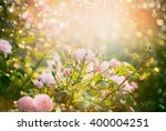 Stock photo pink pale roses bush over summer garden or park nature background roses garden outdoor with 400004251