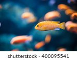Coral Reef Fishes In The Water...