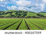 rows of lettuce crops with... | Shutterstock . vector #400167559